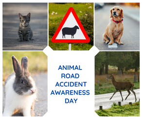 Animal Road Accident Awareness Day - Sunset Tyres Derby