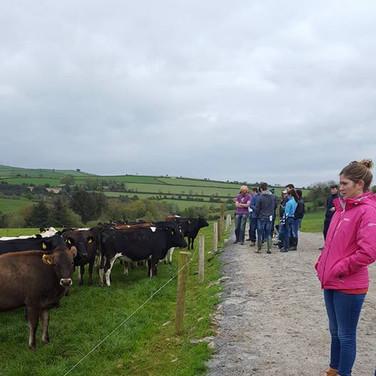 FAVS Farm Walk 2017