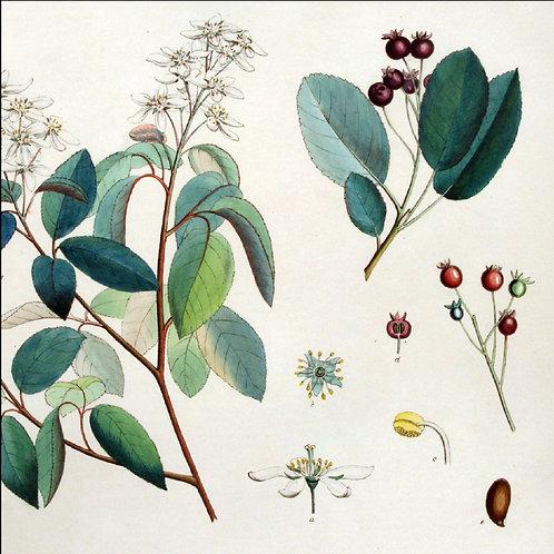 #012 Juneberry - Juneberry