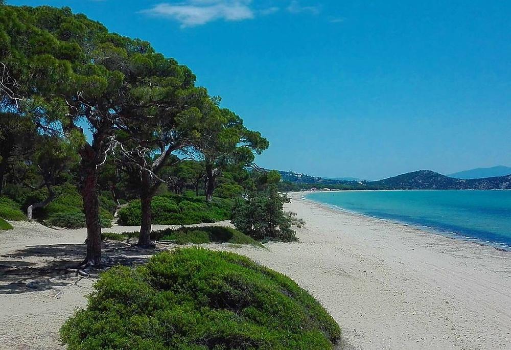 Η αμμώδης παραλία Σχινιά με το μοναδικό Πευκοδάσος | Φωτ.: Δημήτρης Πλιάγκος