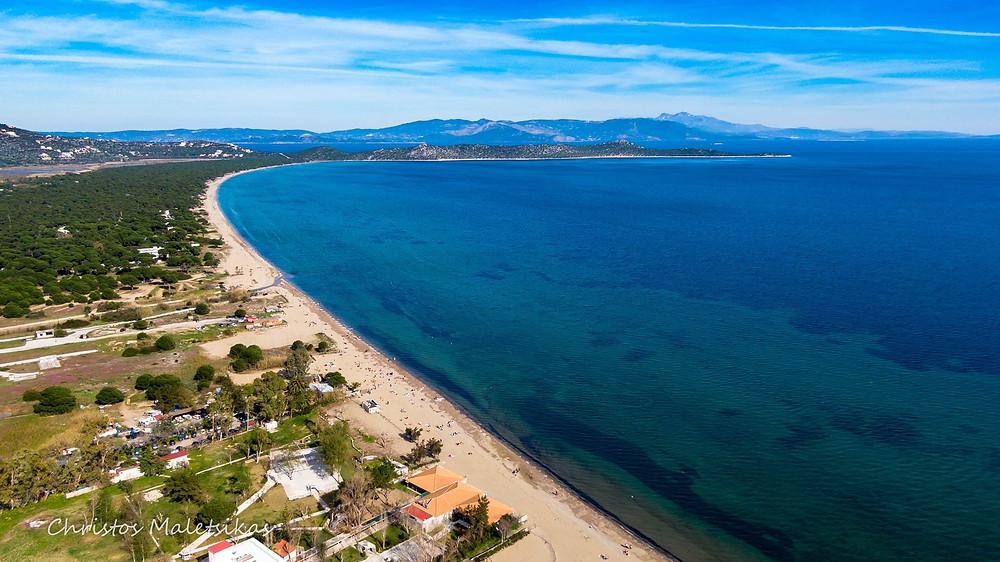 Η παραλία Μπρεξίζα στον Μαραθώνα και στο βάθος το Πευκοδάσος   Φωτ.: Χρήστος Μαλέτσικας