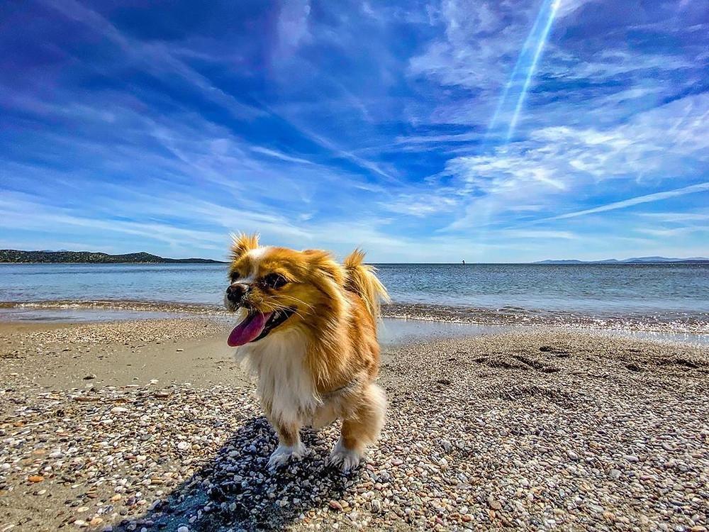 Βόλτες με τον καλύτερό μας φίλο! παραλία Σχινιά | Φωτ. Μαργαρίτα Σάββα