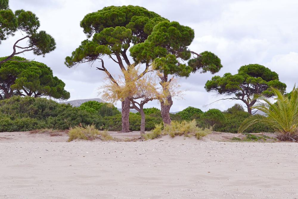 Παραλία Σχινιά / Εθνικό Πάρκο , Μαραθώνας