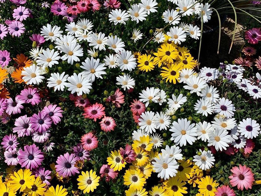 Πολλά φυτά για εξωτερικούς χώρους θα βρείτε στα Φυτώρια Σφυρή στη Νέα Μάκρη.