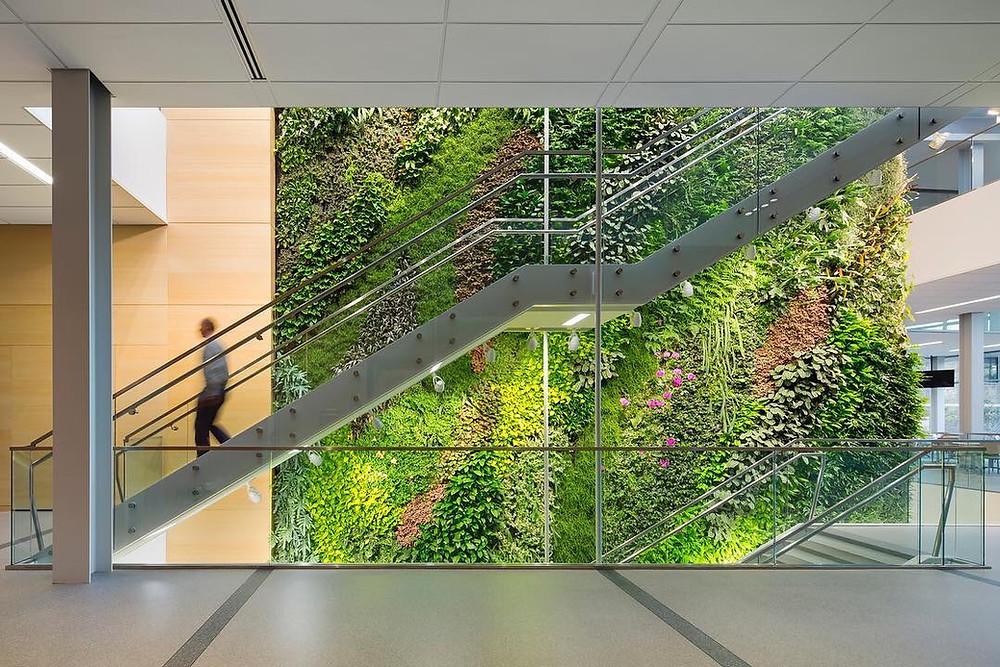 Επιτοιχία moss εγκατάσταση a από το γραφείο Ballinger στο Ινστιτούτο Διατροφής και Υγείας στο New Jersey | φωτογραφία Albert Vecerka - εταιρεία Esto