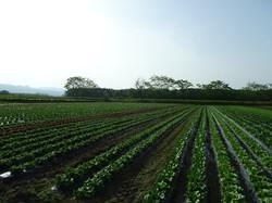 our farm 農園紹介
