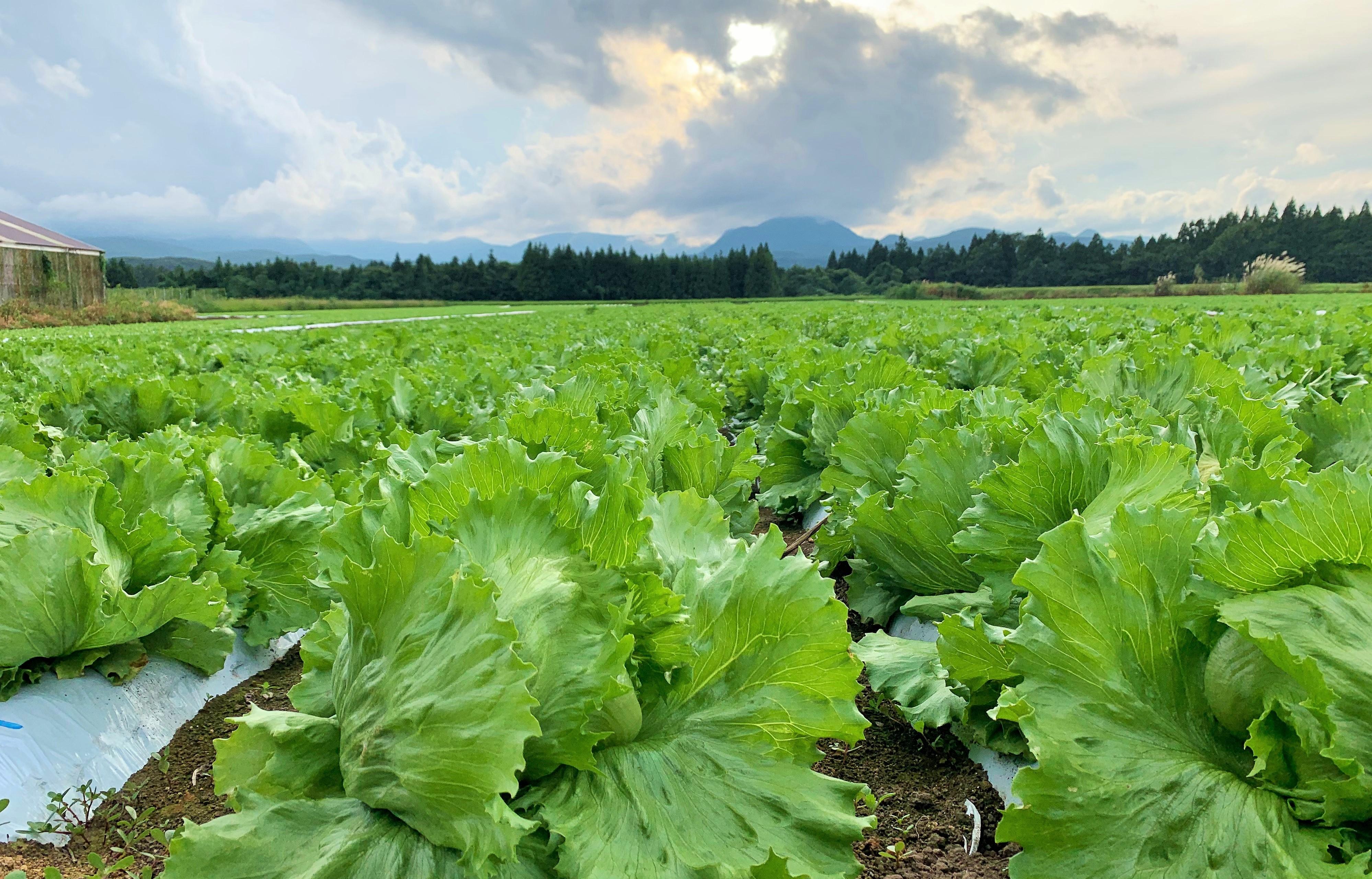 crops  作物