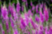 slawek-k-732082-unsplash_500px.jpg