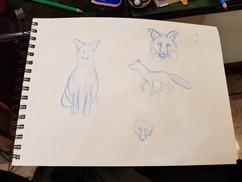 Fox Study - 2019