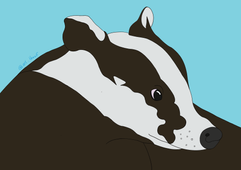 Badger - 2020