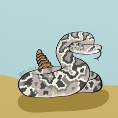 Rattle Snake - 2020