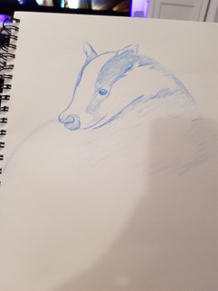 Badger Study