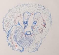 Badger Study -
