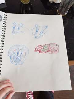 Badger Studies - 2019