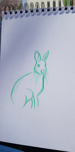 Hare Study - 2019