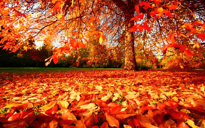 10 Autumnal adventures to enjoy in the area