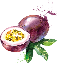 passionfruit_watercolour.png