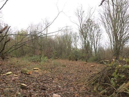 Willow Tit Habitat Creation project (Yorkshire Wildlife Trust) Testimonial