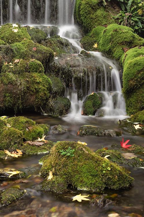 Red Leaf ( Littlebredy Waterfall )