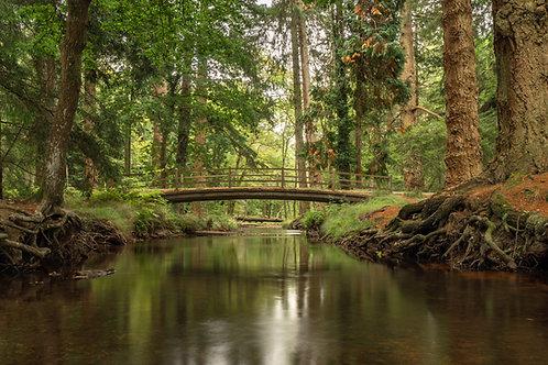 New Forest Blackwater Bridge