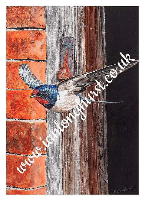Swallow at Vine Farm House, Wivenhoe