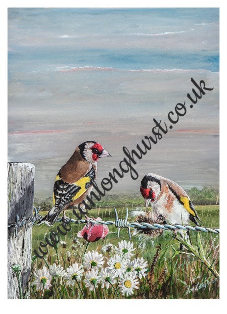 Goldfinches last evening feed