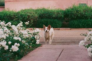 Max - Stray Dog, Morocco (2019)