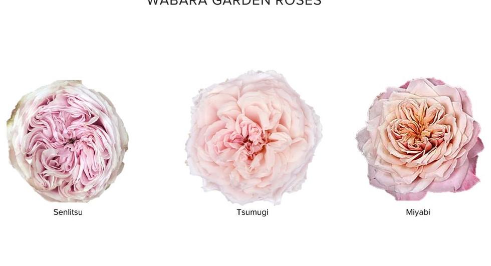 Wabara Collection