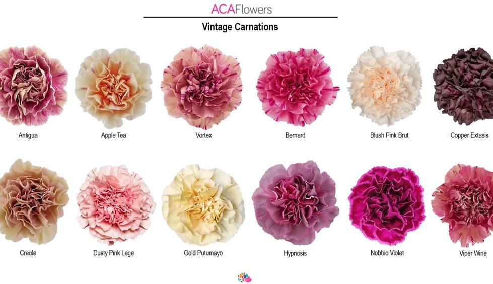 Vintage Carnations