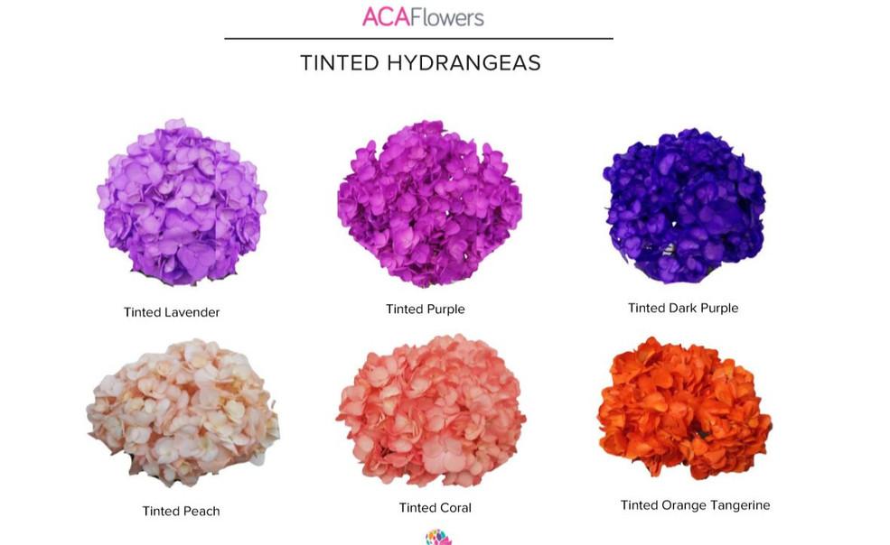 Tinted Hydrangeas