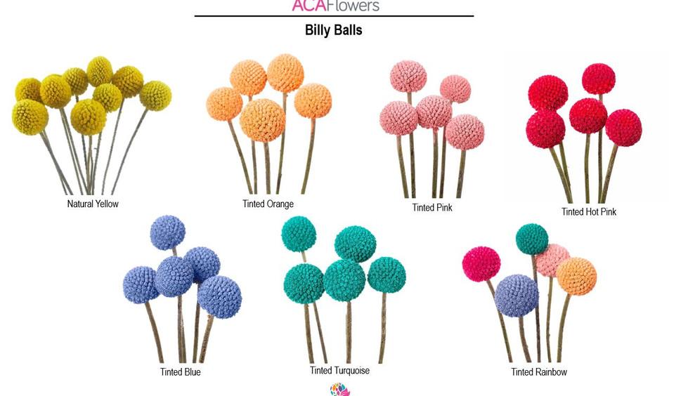 Billy Balls