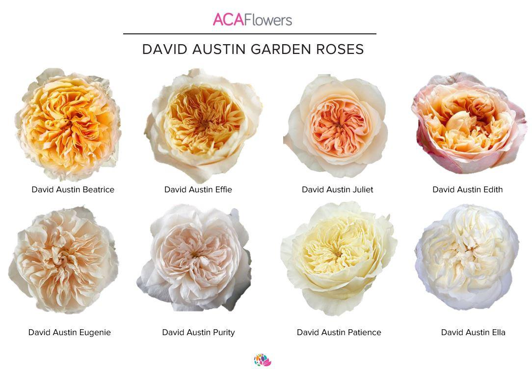 David Austin Collection