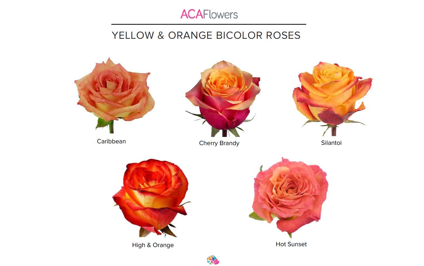 Bi-Color Yellow & Orange