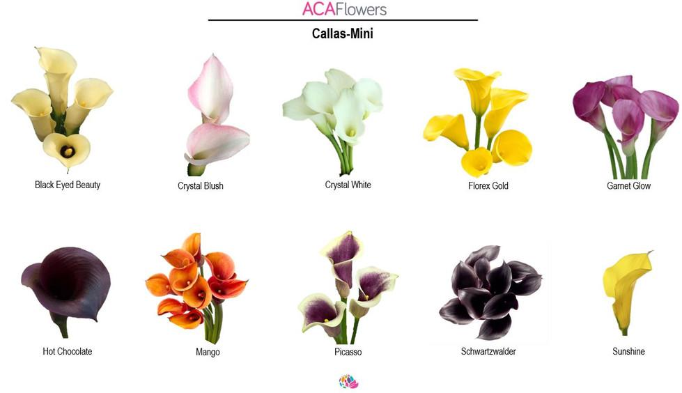 Mini Callas
