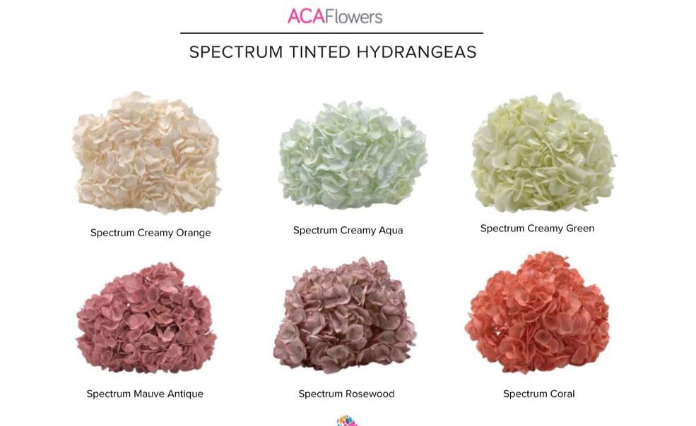 Spectrum Hydrangeas