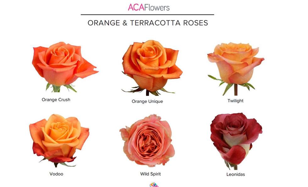 Orange & Terracotta