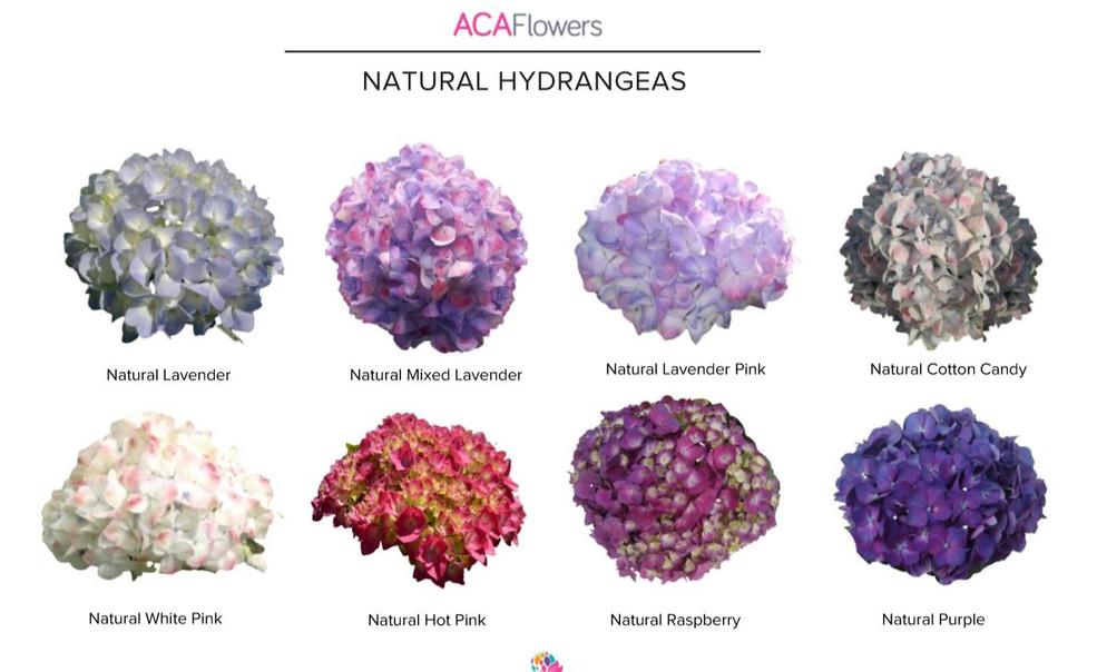 Natural Hydrangeas