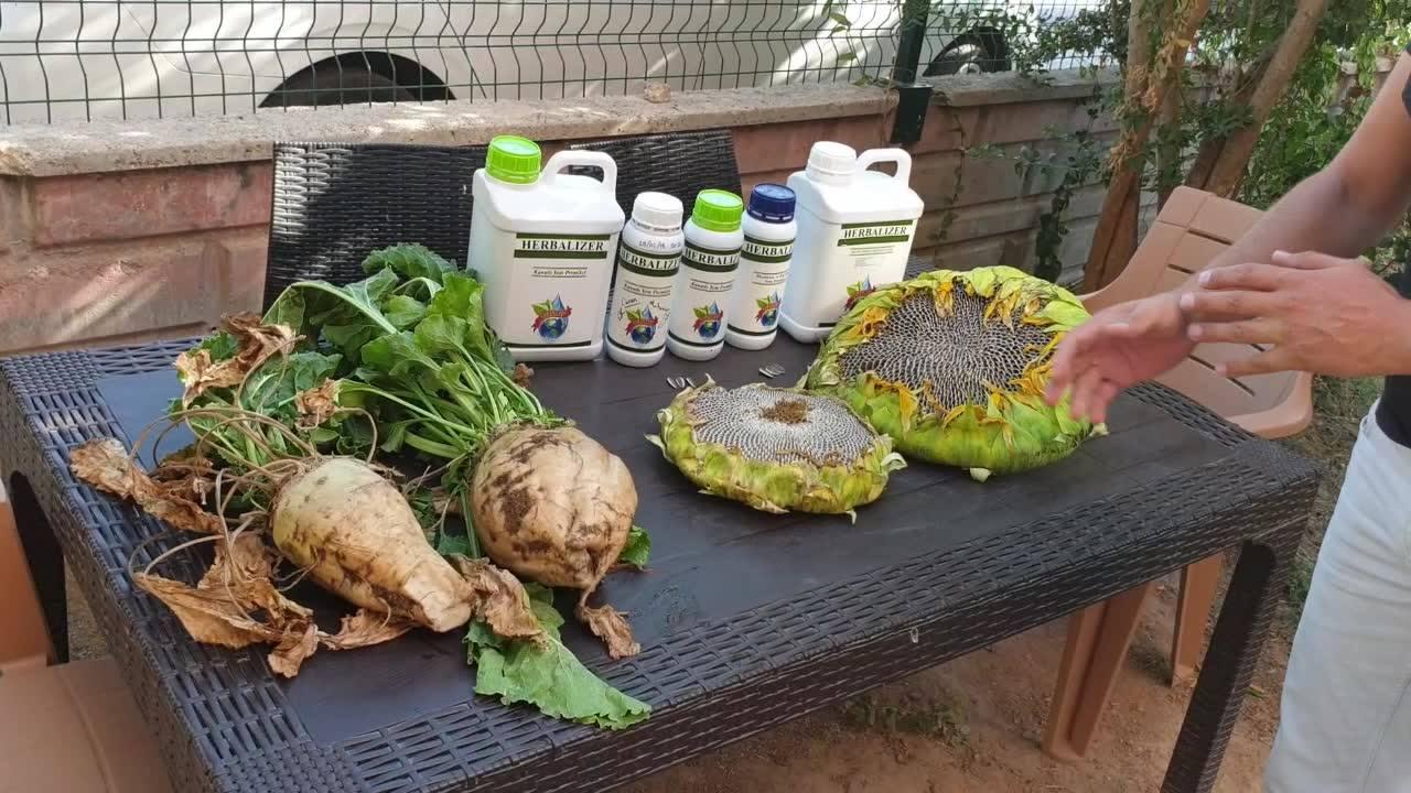 herbalizer üreticilerden gelen şahitli şeker pancarı ve ayçekirdeği