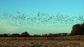 Where Did All The Birds Go?