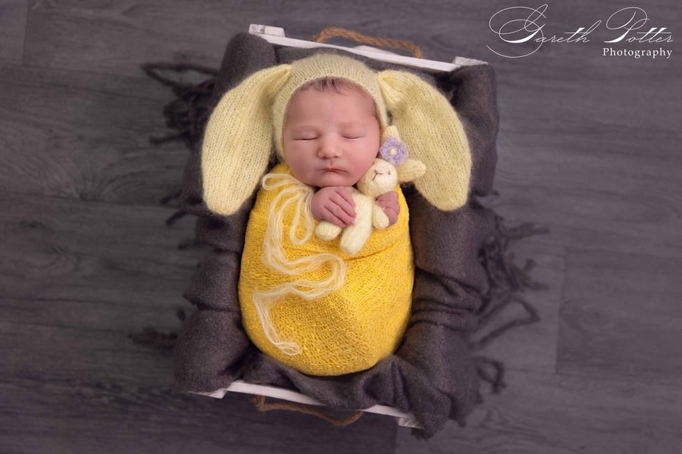 Newborn and Sitter Photographer
