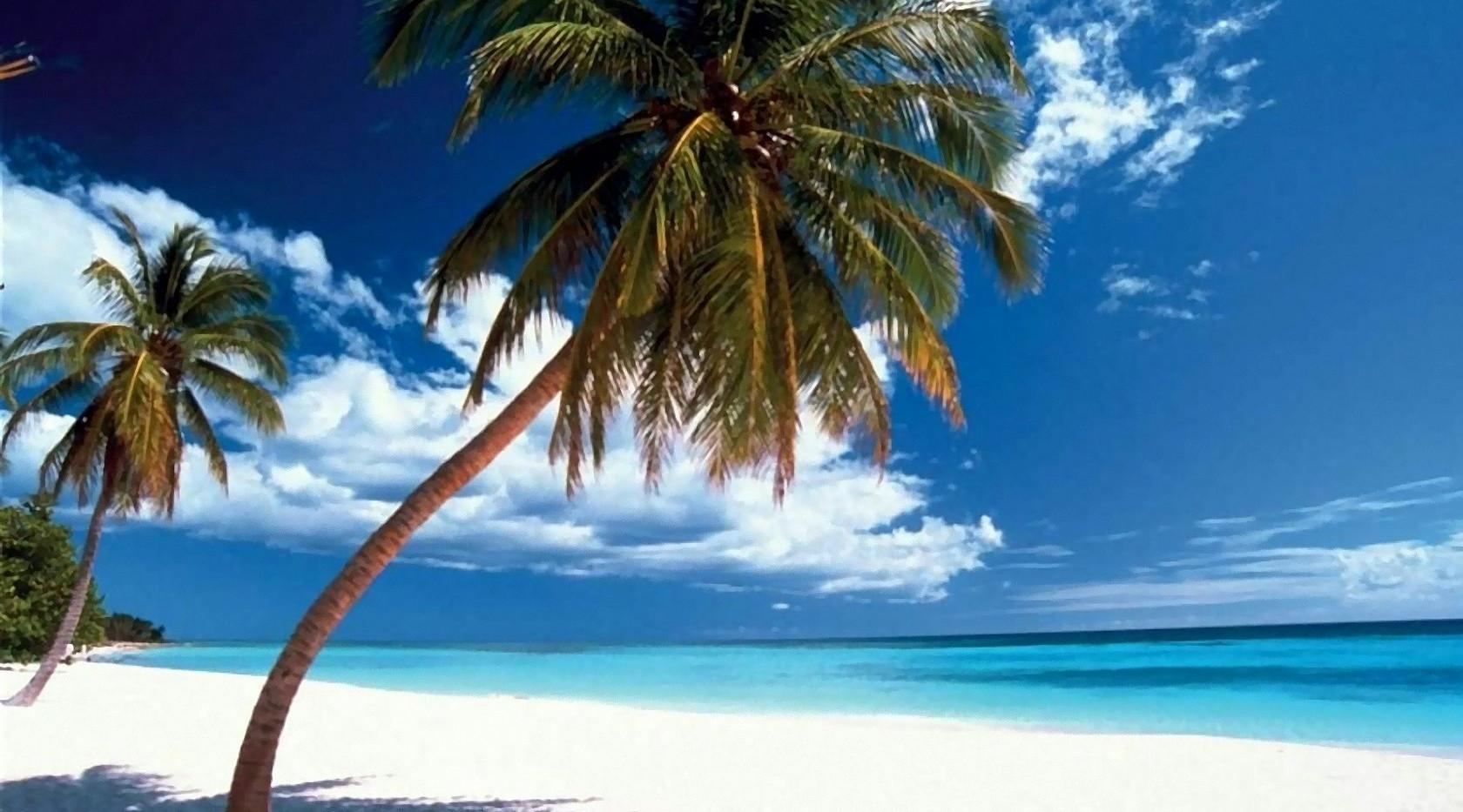 palmen-strand-06.jpg
