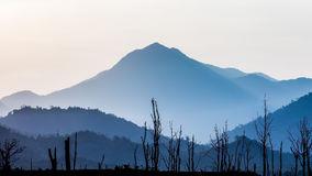 silhouette-dry-tree-mountain-landscape-b