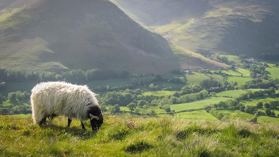 Champions_of_Cumbria_Human_Landscapes1.j