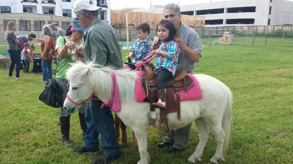 Ponies2.JPG