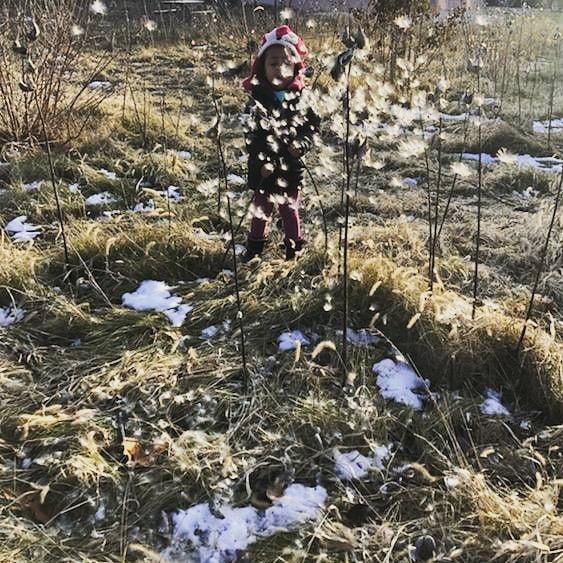 More milkweed! Sometimes play is messy,