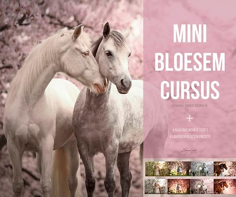 online cursus photoshop-15.png