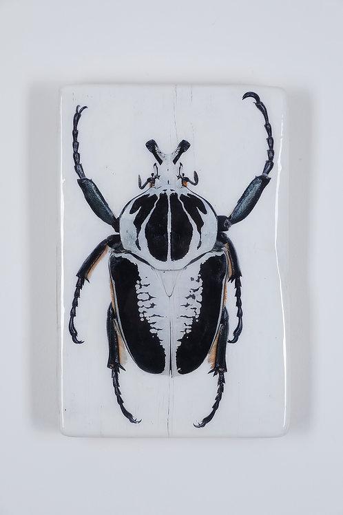#beetle-01-18x28