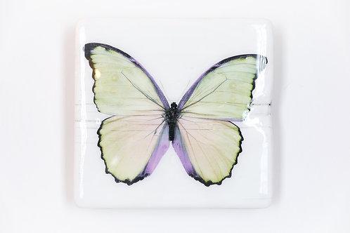 butterfly, Schmetterling gelb, Epoxi Surface, woodentiles.de