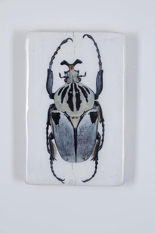 #beetle-03-28x42