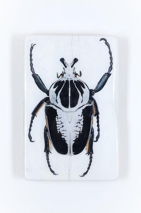#beetle-01-28x42